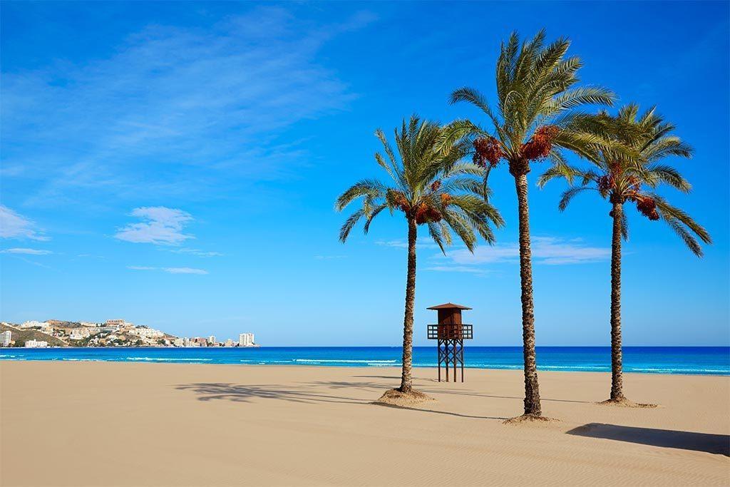 palmeras playa de cullera